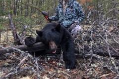 "Cookie-with-a-Saskatchewan-bear-2019-20""-pronghorn-longbow"