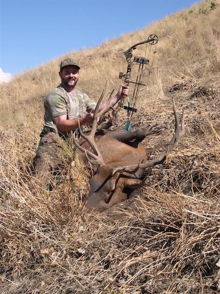 Elk1-Patrick Byrne