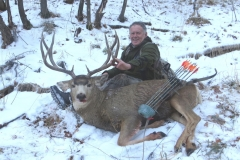 Mike Barrett - 56# Predator Bow with full metal jacket arrows and aboyer broadhead - Mule deer in Idaho on Nov 21 at 16 yards
